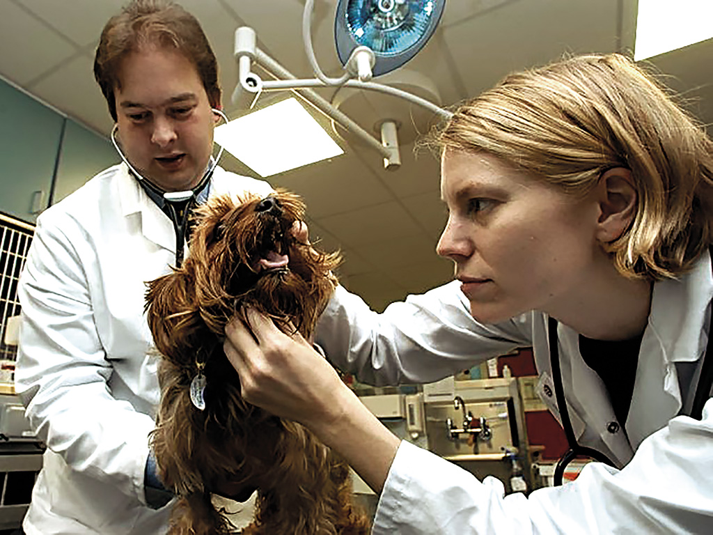 dog getting teeth checked